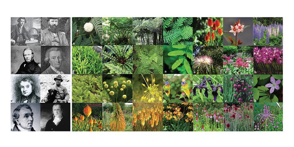 The Planthunters garden